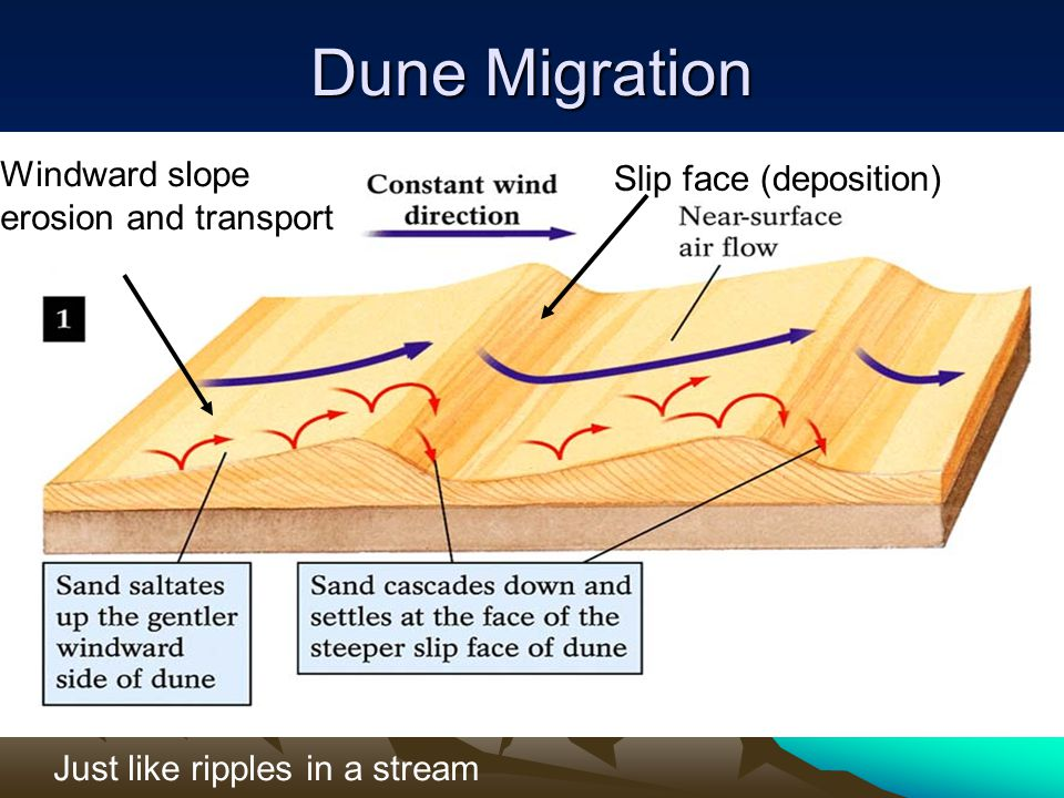 Dune Migration Windward slope Slip face (deposition)
