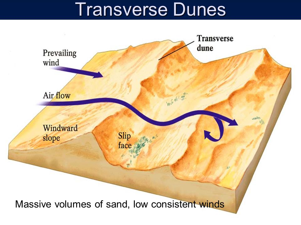 Transverse Dunes Massive volumes of sand, low consistent winds