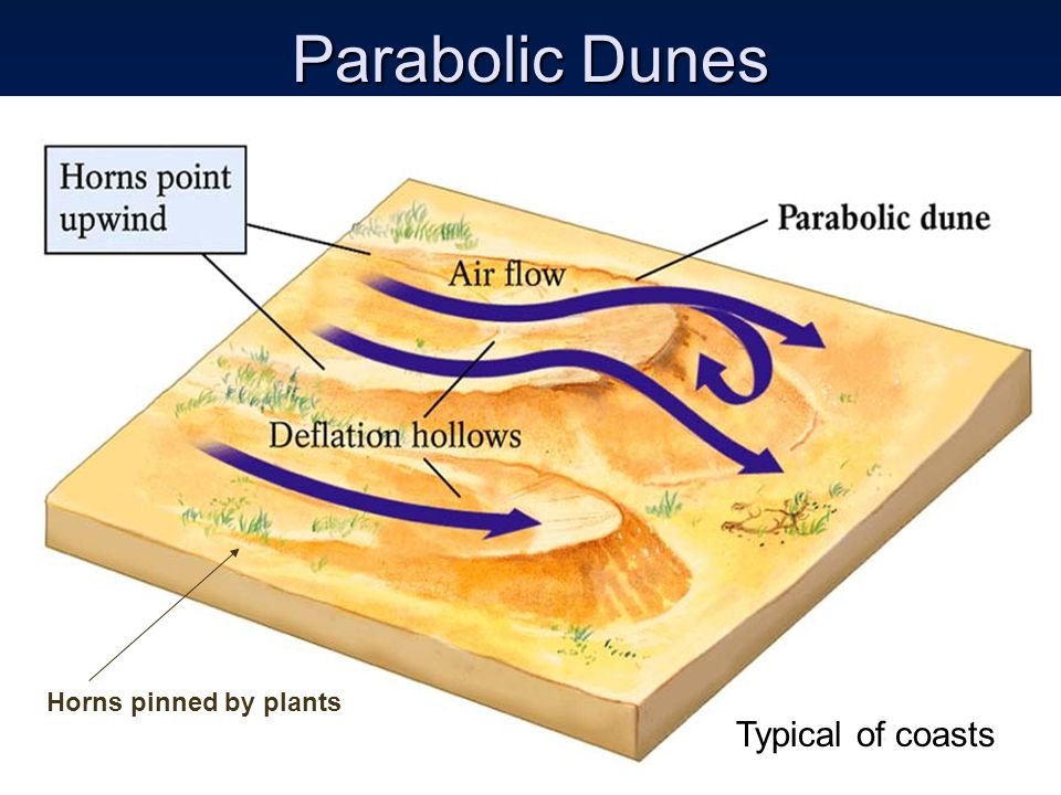 Parabolic Dunes Typical of coasts Horns pinned by plants