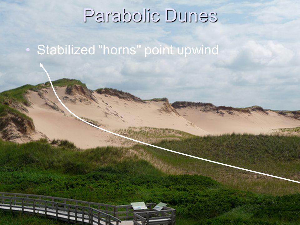 Parabolic Dunes Stabilized horns point upwind