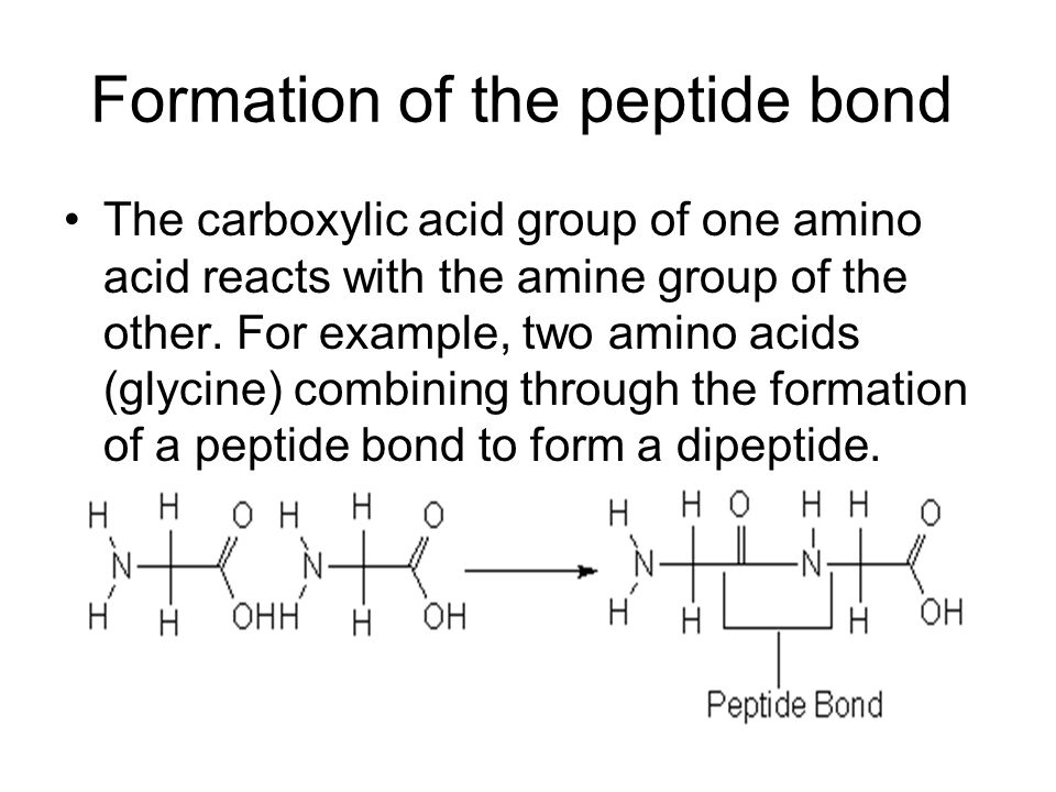 Formation of the peptide bond