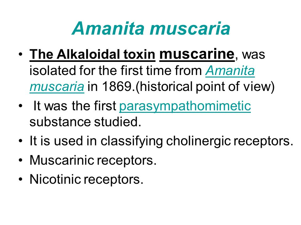 Amanita muscaria The Alkaloidal toxin muscarine, was isolated for the first time from Amanita muscaria in 1869.(historical point of view)