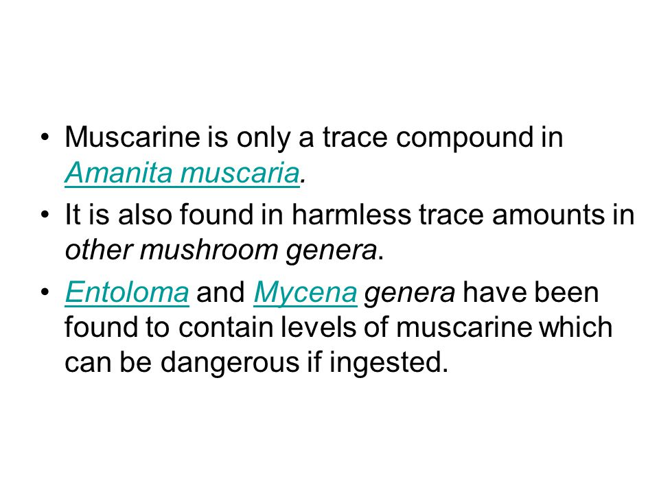 Muscarine is only a trace compound in Amanita muscaria.