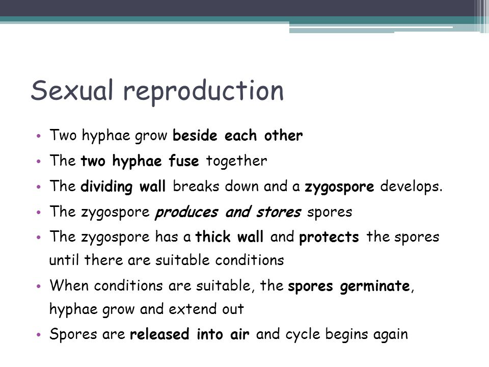 Sexual reproduction Two hyphae grow beside each other