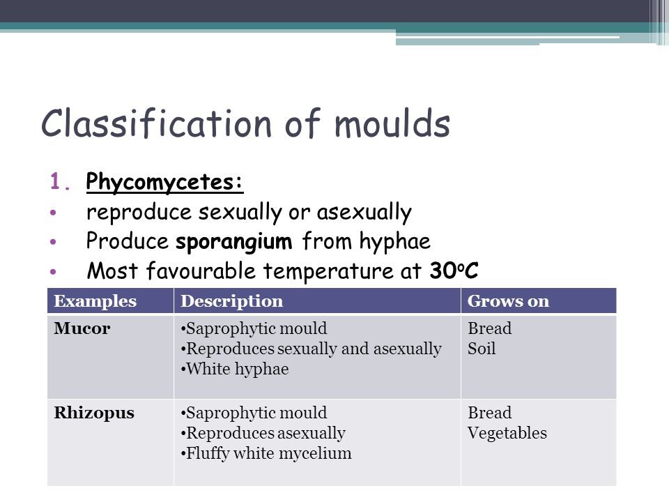 Classification of moulds