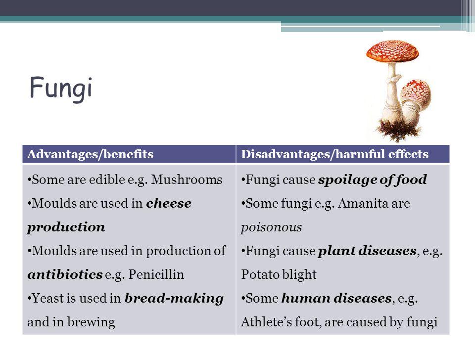 Fungi Some are edible e.g. Mushrooms