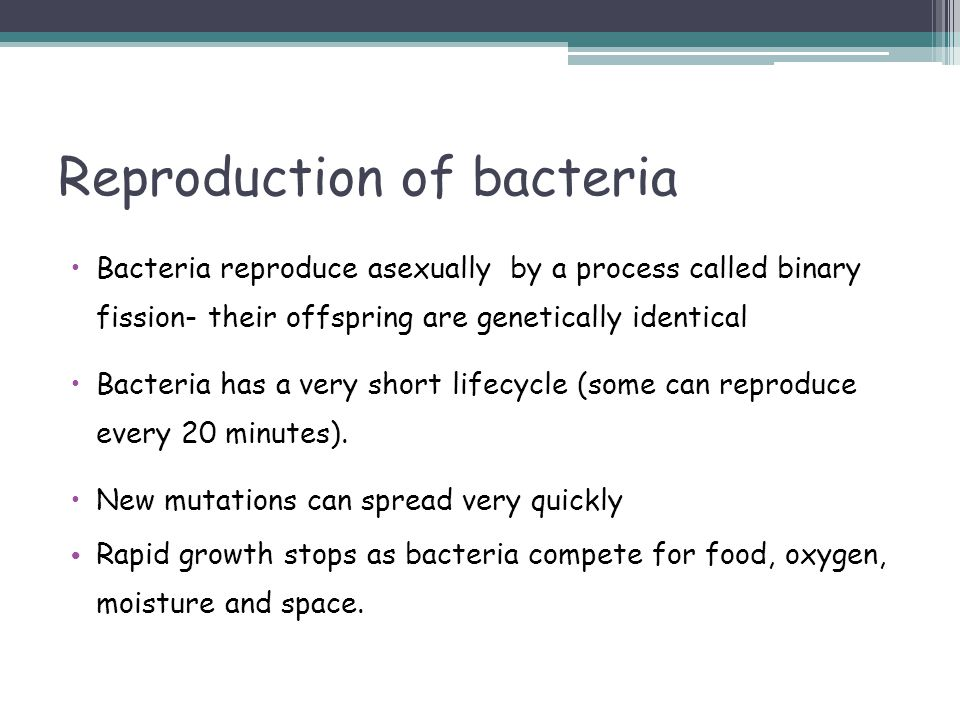 Reproduction of bacteria