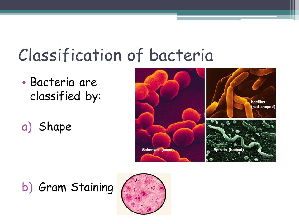 Classification of bacteria