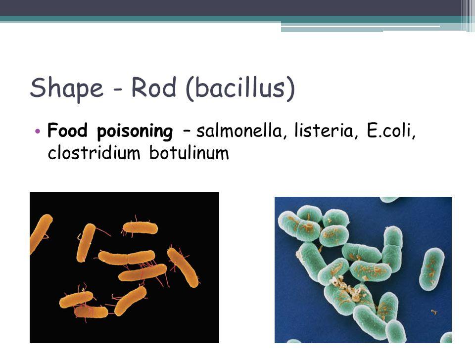 Shape - Rod (bacillus) Food poisoning – salmonella, listeria, E.coli, clostridium botulinum