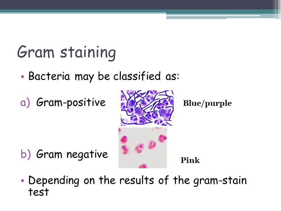 Gram staining Bacteria may be classified as: Gram-positive