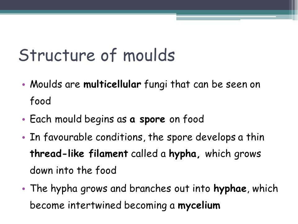 Structure of moulds Moulds are multicellular fungi that can be seen on food. Each mould begins as a spore on food.