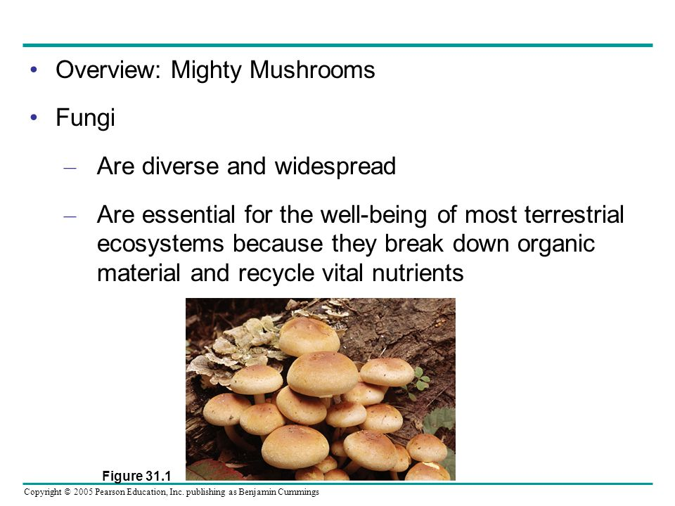 Overview: Mighty Mushrooms Fungi Are diverse and widespread