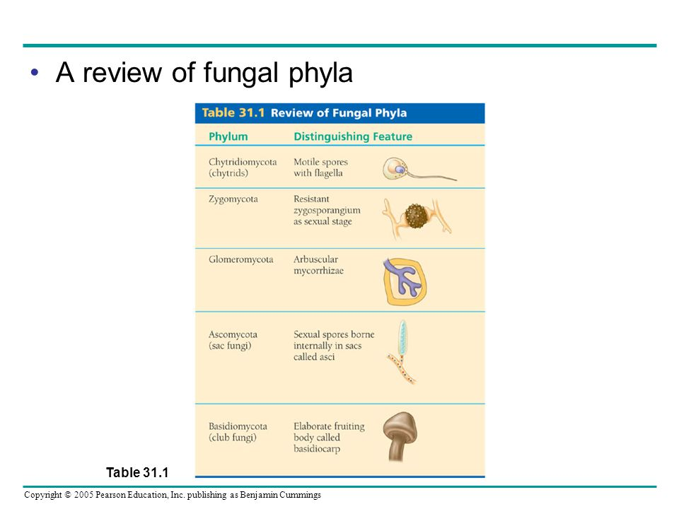 A review of fungal phyla