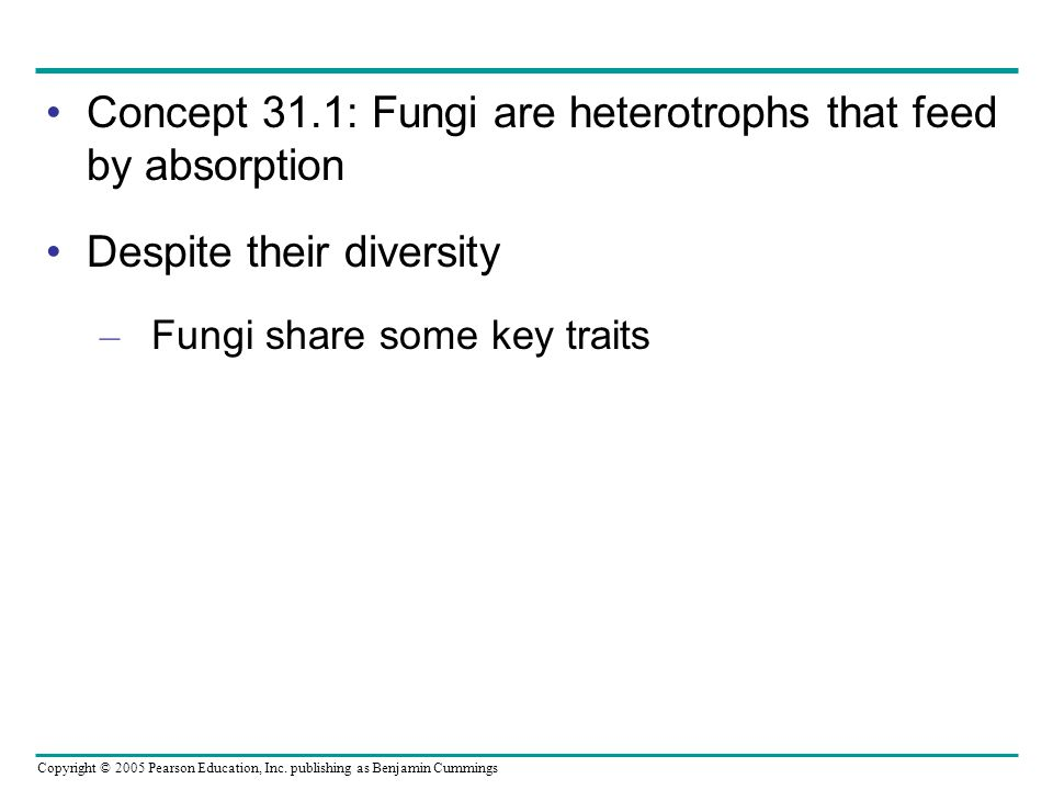 Concept 31.1: Fungi are heterotrophs that feed by absorption