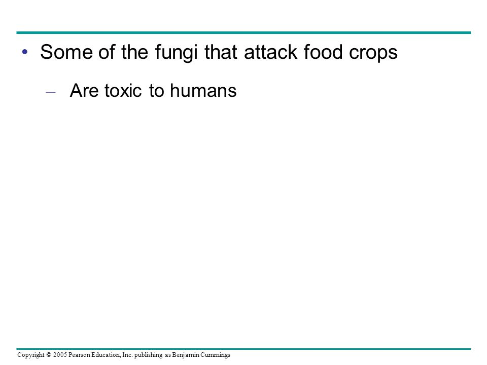 Some of the fungi that attack food crops