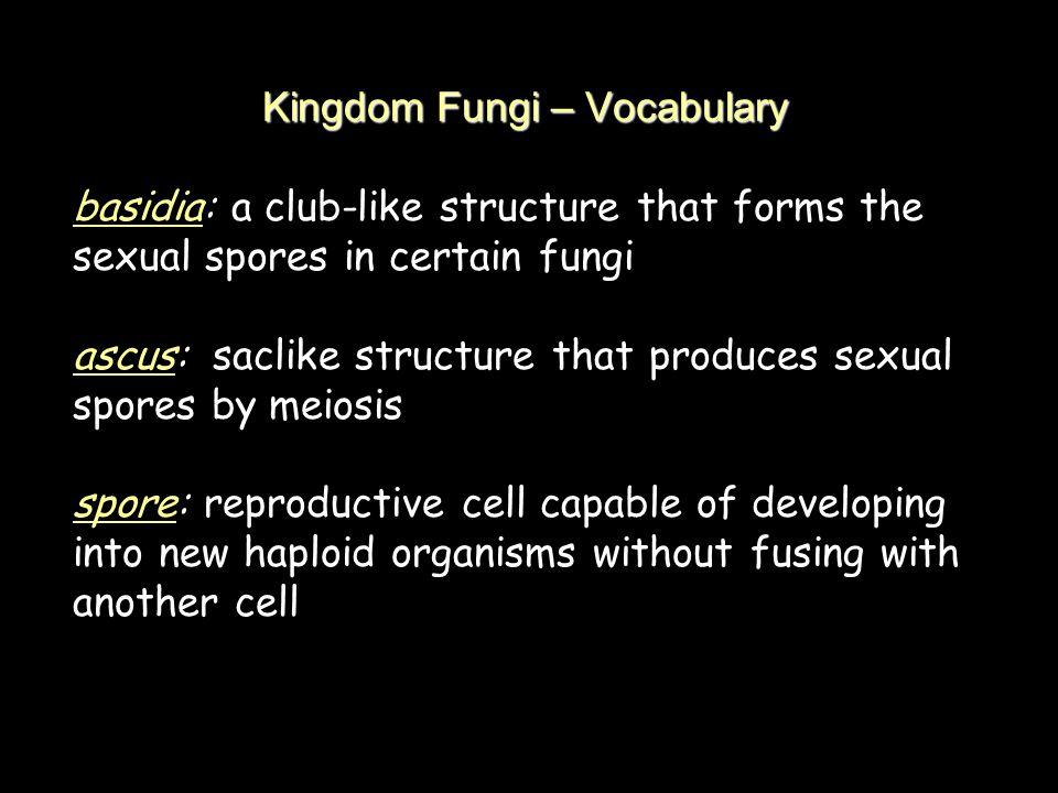 Kingdom Fungi – Vocabulary