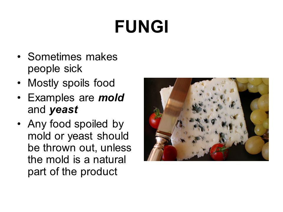 FUNGI Sometimes makes people sick Mostly spoils food