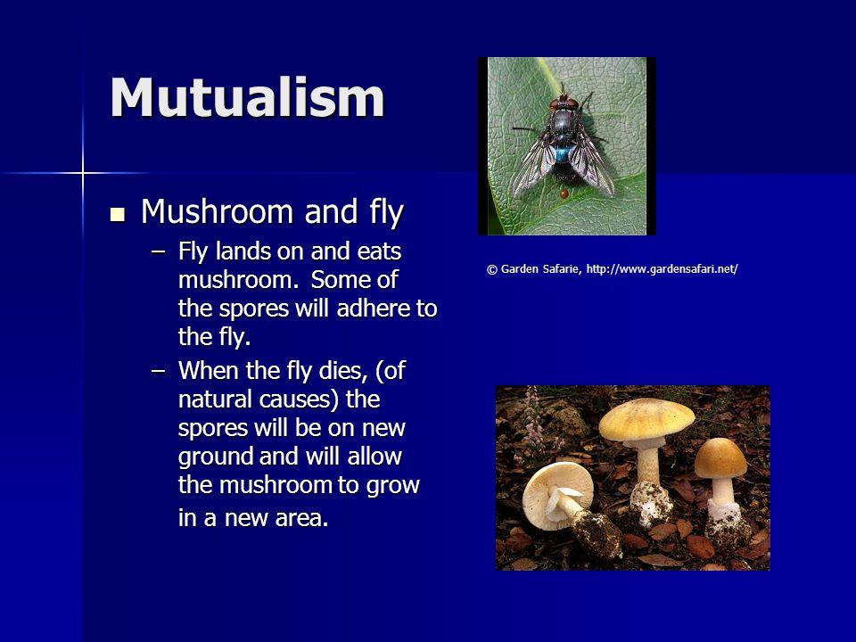Mutualism Mushroom and fly
