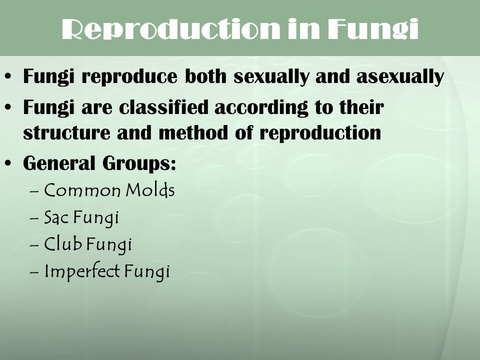 Reproduction in Fungi Fungi reproduce both sexually and asexually