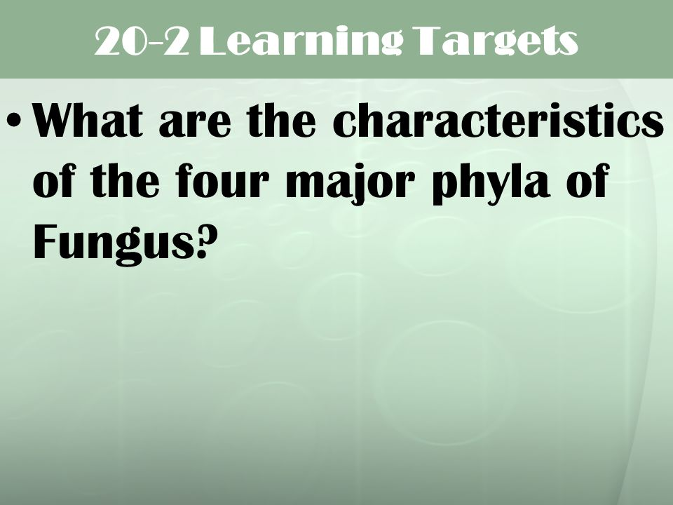 What are the characteristics of the four major phyla of Fungus