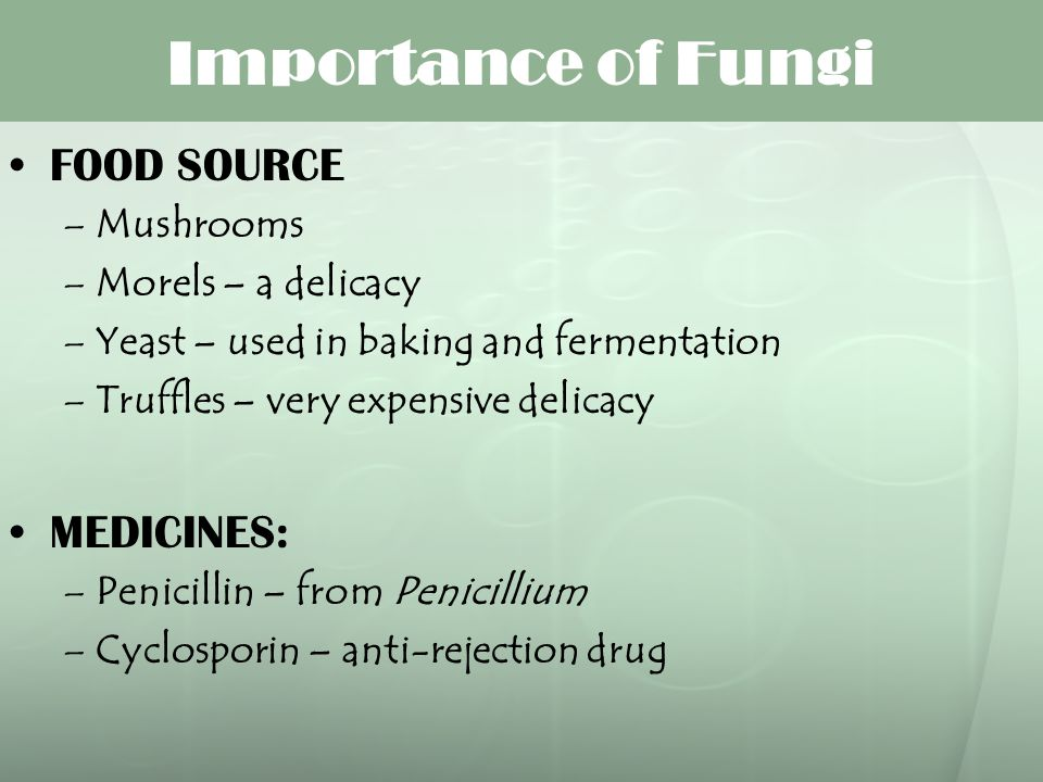 Importance of Fungi FOOD SOURCE MEDICINES: Mushrooms