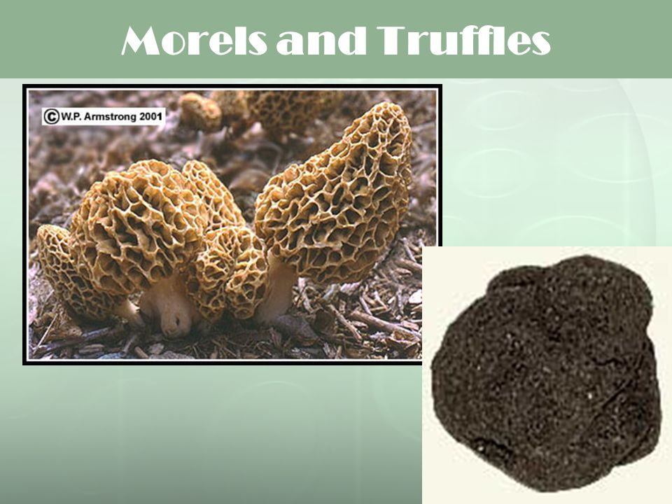 Morels and Truffles