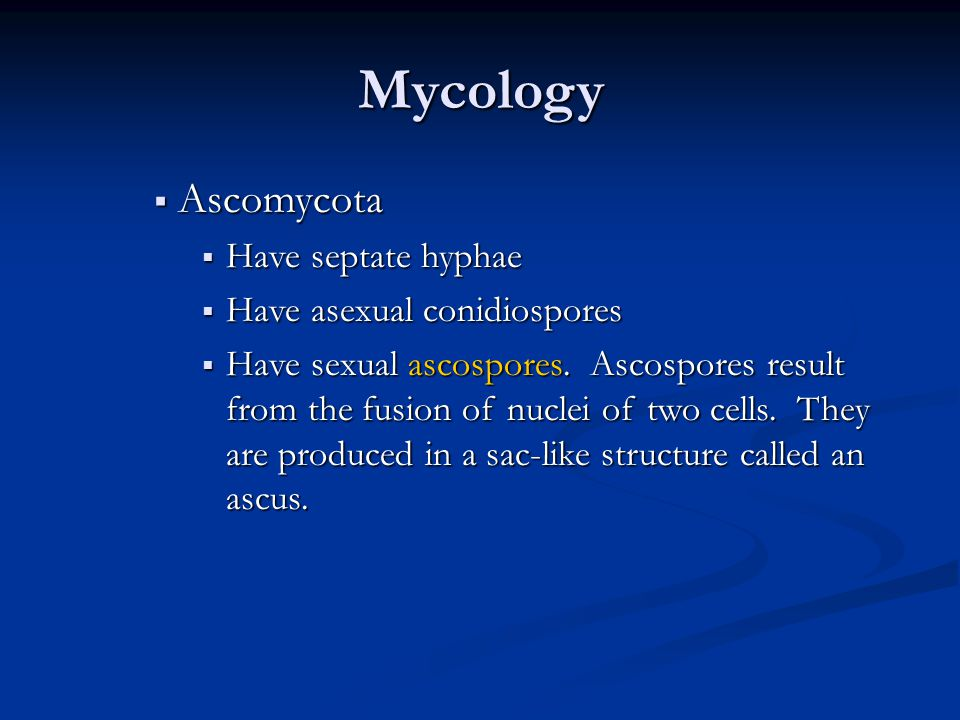 Mycology Ascomycota Have septate hyphae Have asexual conidiospores