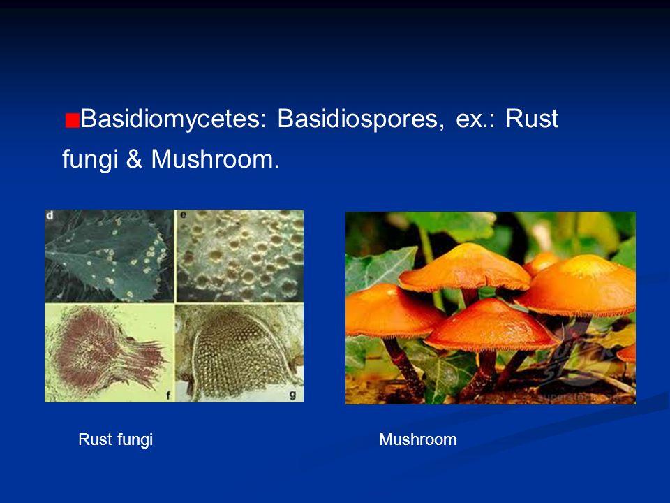 Basidiomycetes: Basidiospores, ex.: Rust fungi & Mushroom.