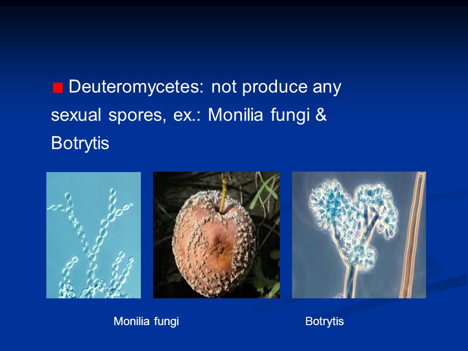 Deuteromycetes: not produce any sexual spores, ex