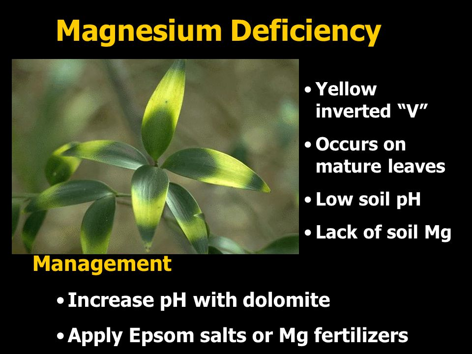 Magnesium Deficiency Management Increase pH with dolomite