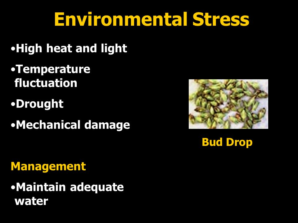 Environmental Stress High heat and light Temperature fluctuation