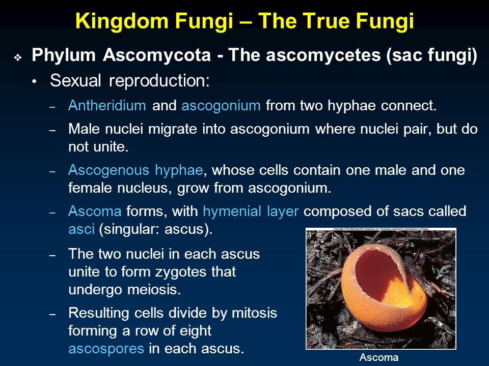 Kingdom Fungi – The True Fungi