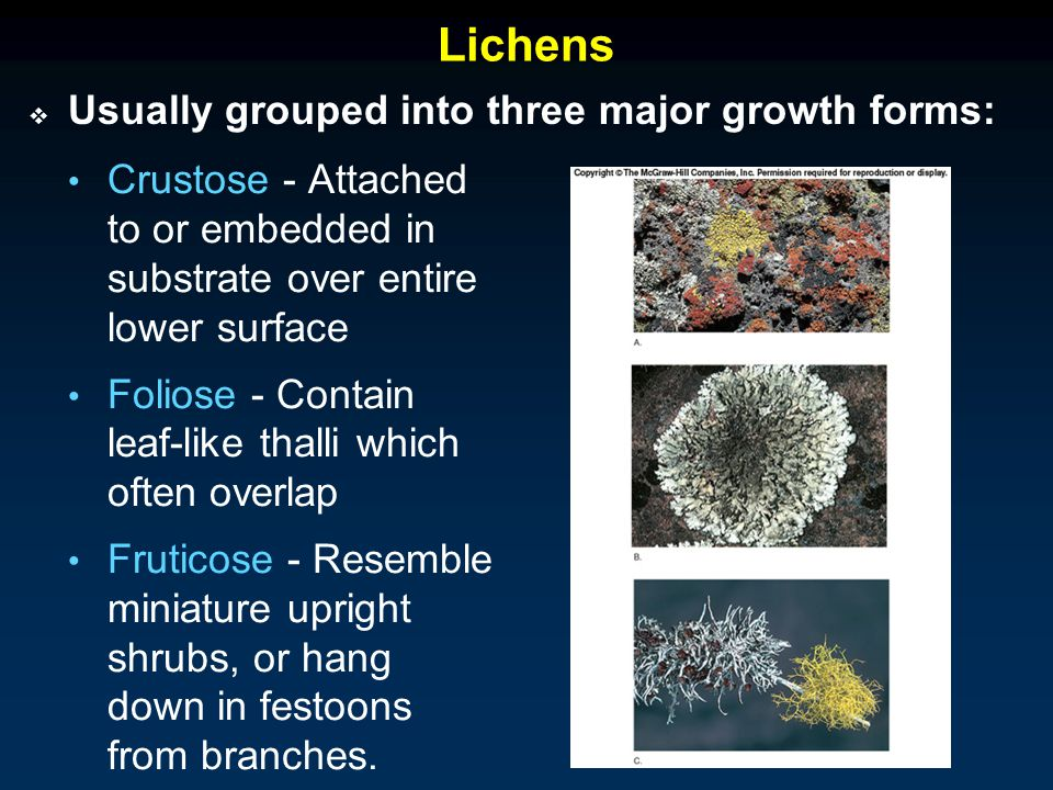 Lichens Usually grouped into three major growth forms: