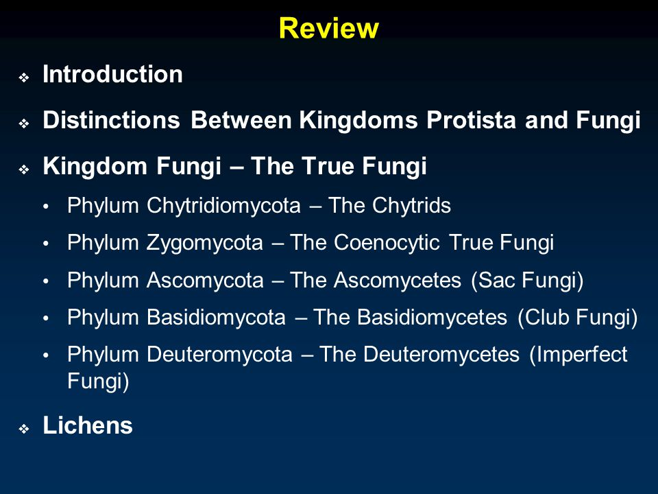 Review Introduction Distinctions Between Kingdoms Protista and Fungi