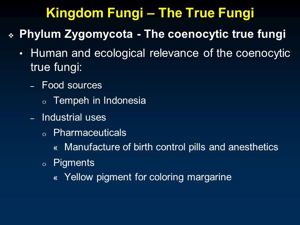Kingdom Fungi – The True Fungi