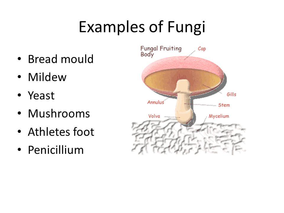 Examples of Fungi Bread mould Mildew Yeast Mushrooms Athletes foot