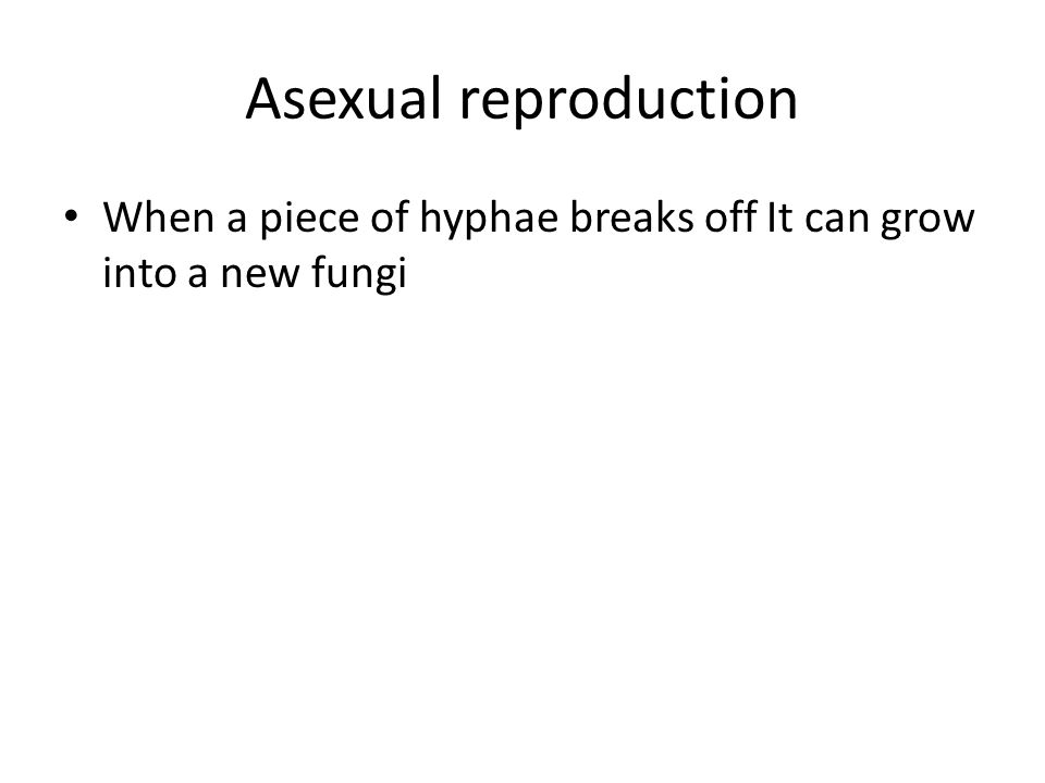 Asexual reproduction When a piece of hyphae breaks off It can grow into a new fungi