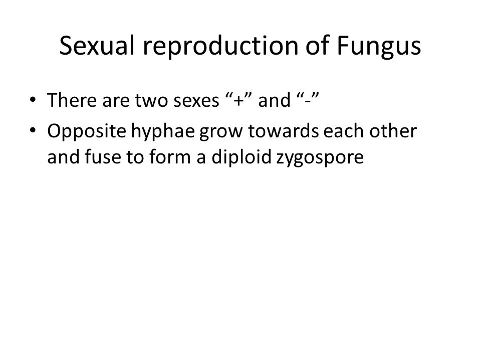 Sexual reproduction of Fungus