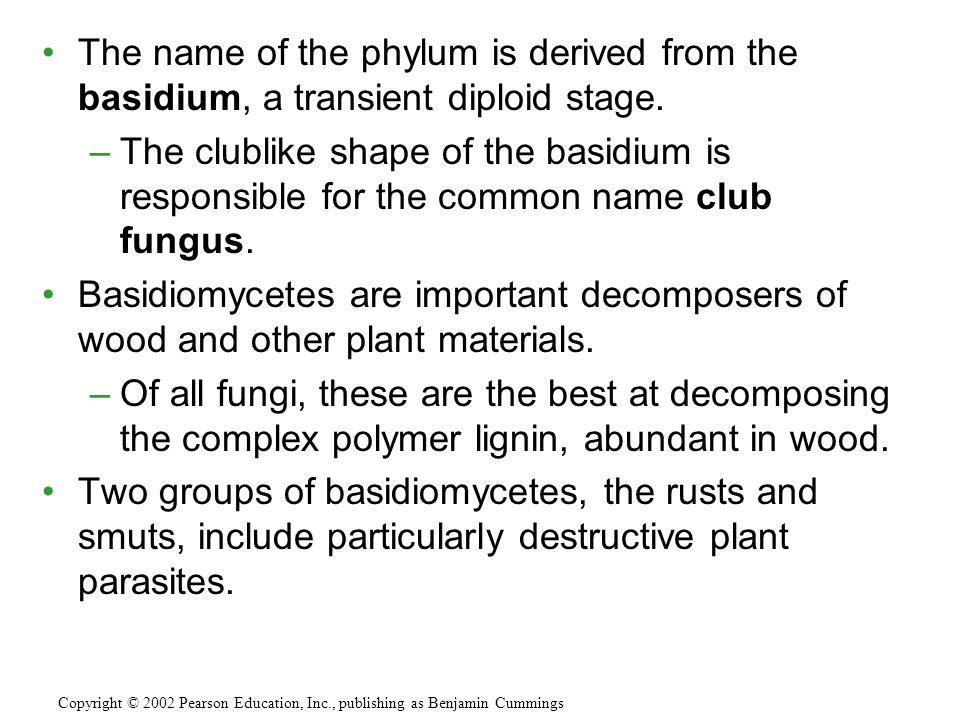 The name of the phylum is derived from the basidium, a transient diploid stage.