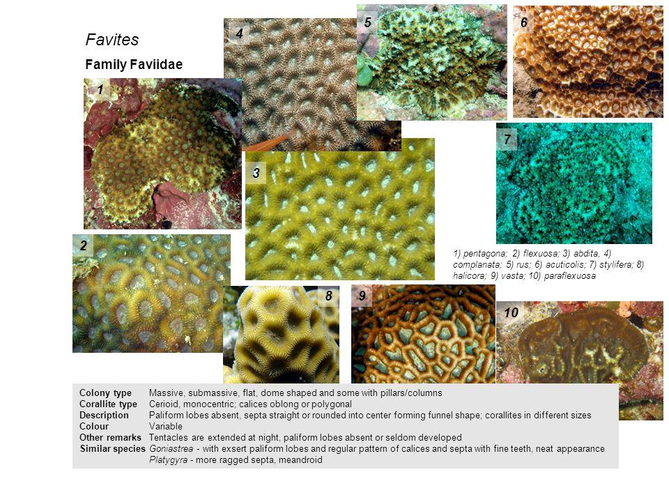Favites 5 6 4 Family Faviidae 1 7 3 2 8 9 10