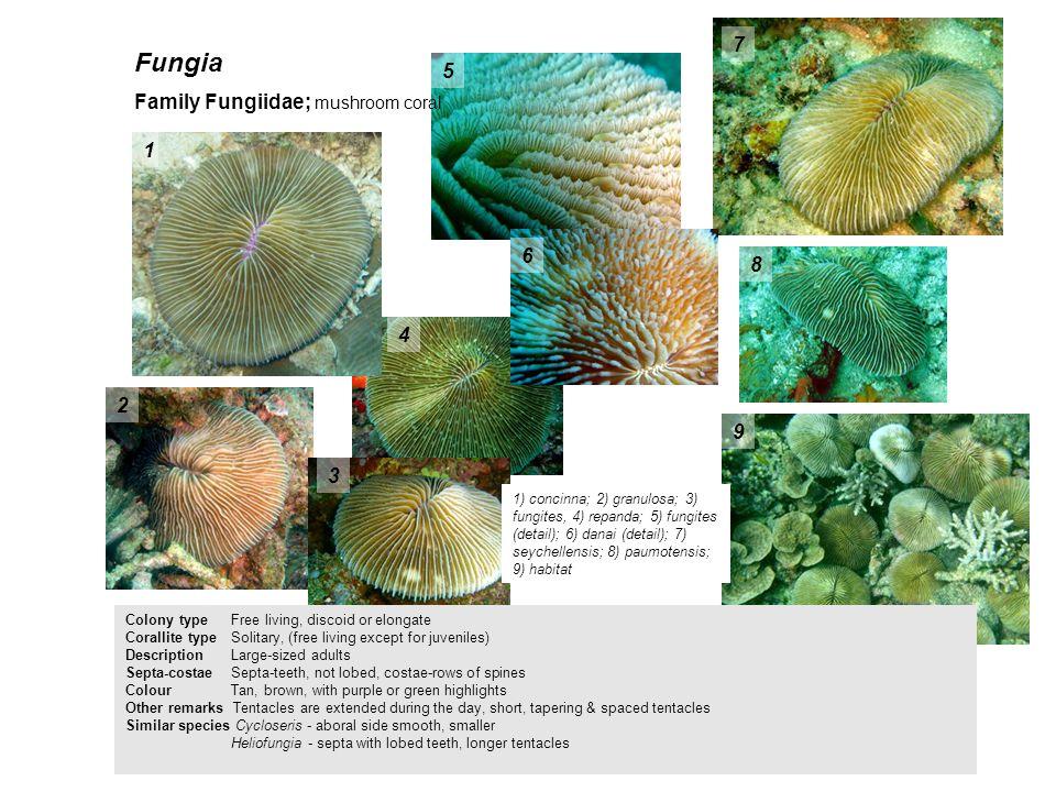 Fungia 7 5 Family Fungiidae; mushroom coral 1 6 8 4 2 9 3