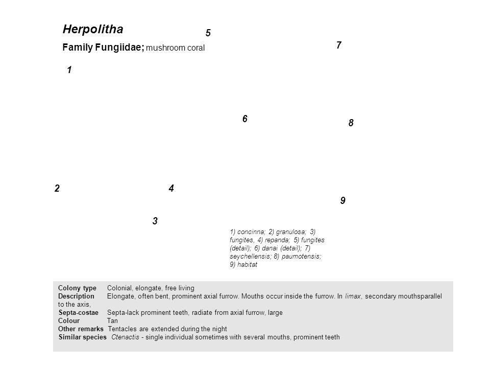 Herpolitha 5 Family Fungiidae; mushroom coral 7 1 6 8 2 4 9 3