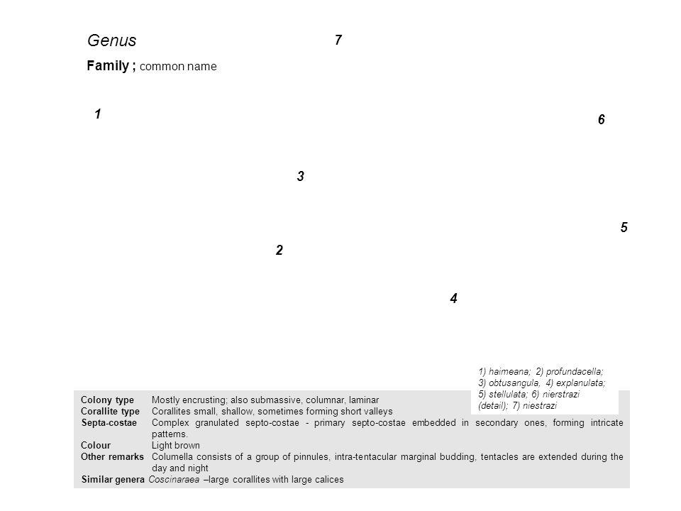 Genus 7 Family ; common name 1 6 3 5 2 4