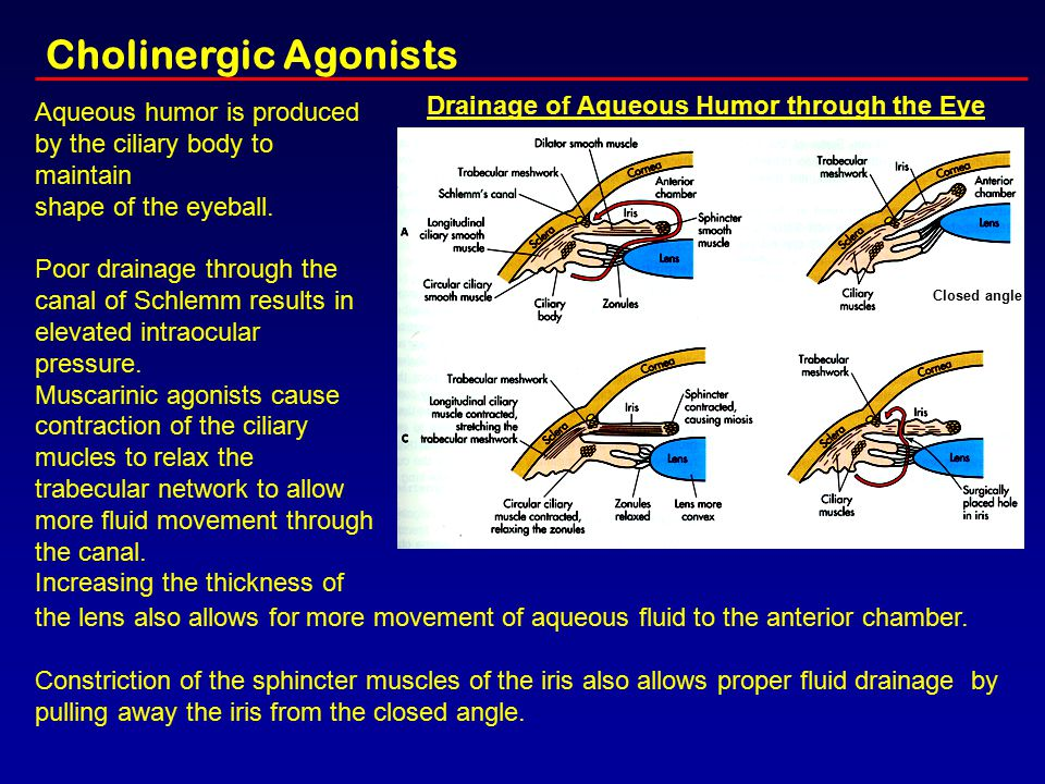 Cholinergic Agonists Drainage of Aqueous Humor through the Eye