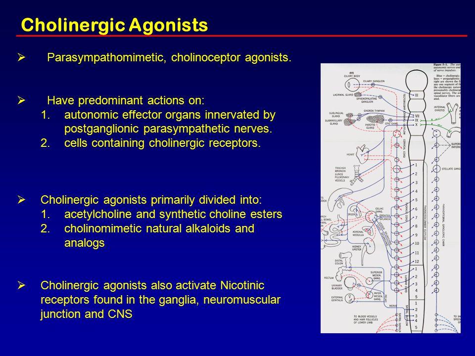Cholinergic Agonists Parasympathomimetic, cholinoceptor agonists.