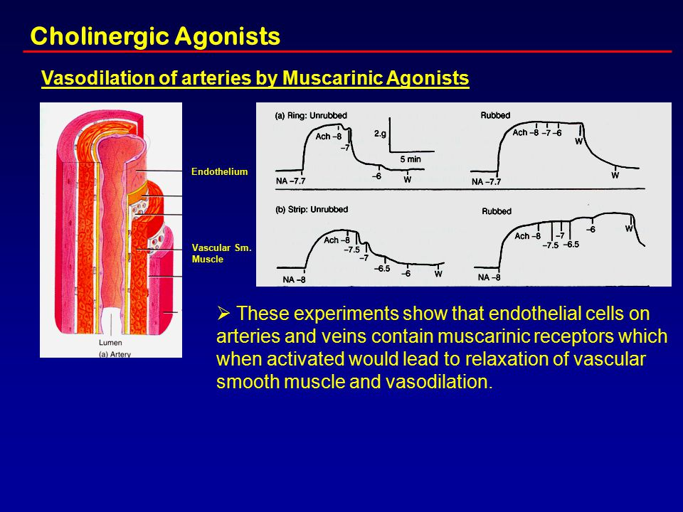 Cholinergic Agonists Vasodilation of arteries by Muscarinic Agonists