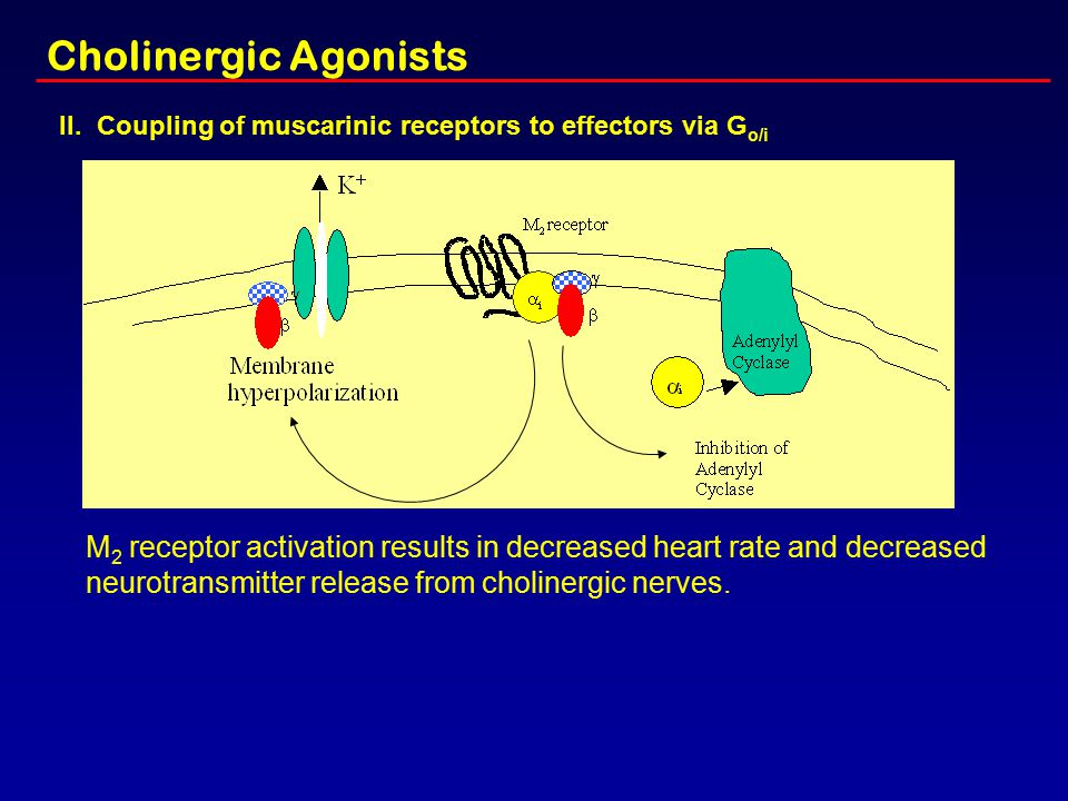 Cholinergic Agonists II. Coupling of muscarinic receptors to effectors via Go/i.