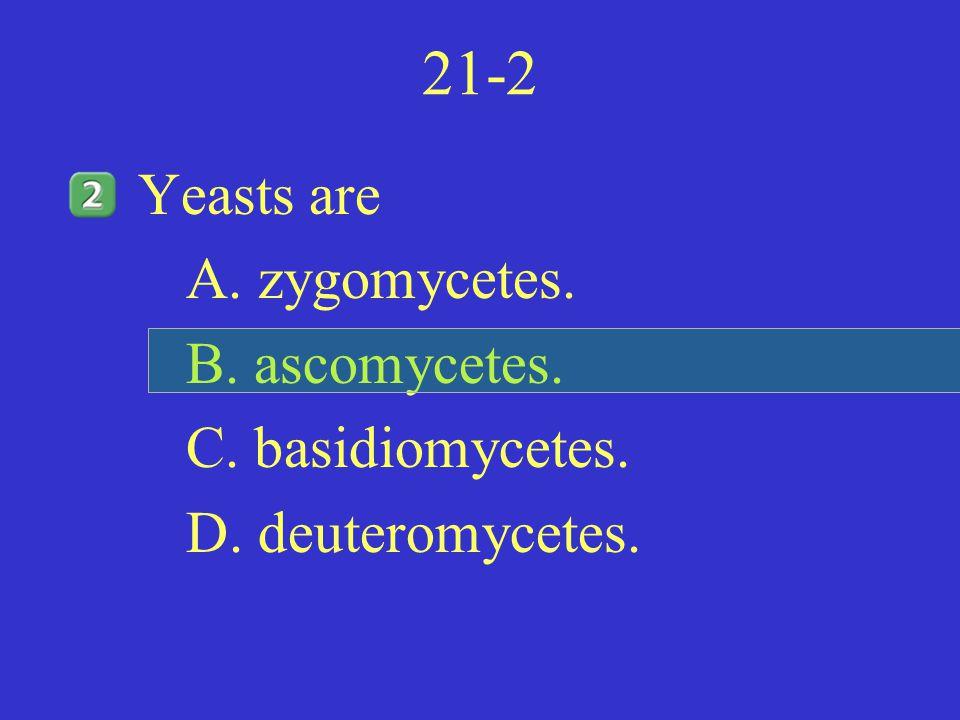 21-2 Yeasts are A. zygomycetes. B. ascomycetes. C. basidiomycetes.