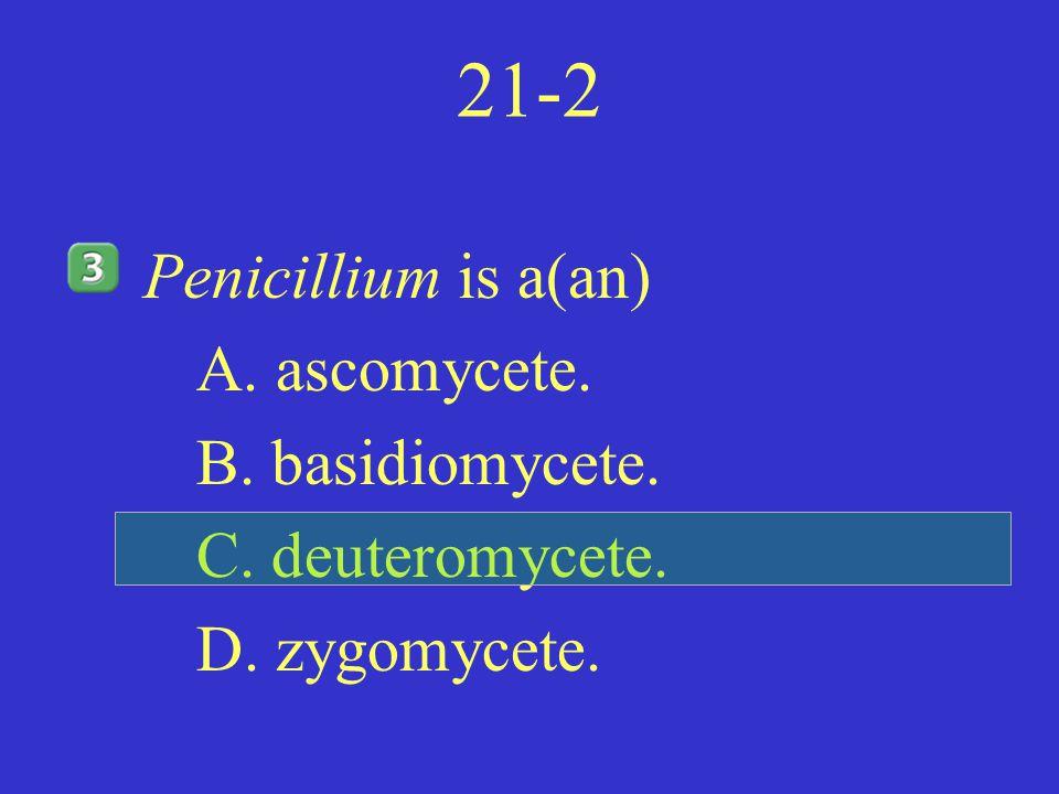 21-2 Penicillium is a(an) A. ascomycete. B. basidiomycete.