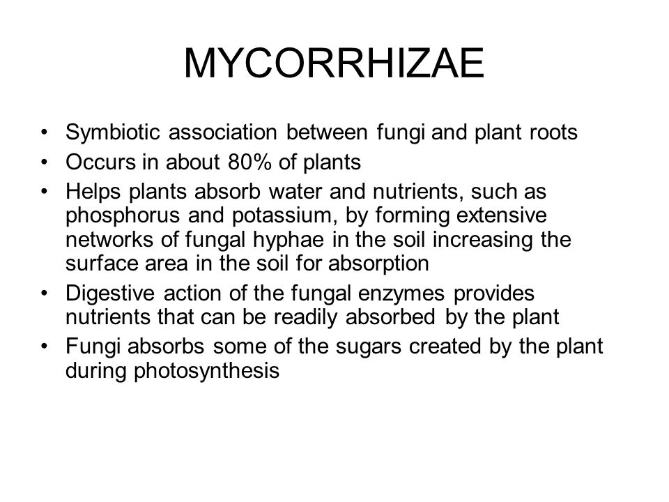MYCORRHIZAE Symbiotic association between fungi and plant roots